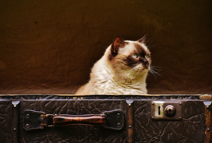 cat-luggage-1644614_960_720